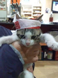 猫も応援(^-^)v