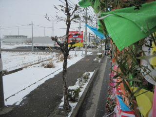 奉納パレードは雪