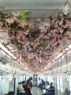 電車に梅、桜が…